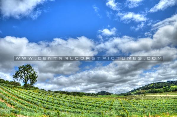 halter-ranch-winery-vineyard_3505