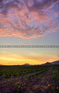edna-valley-sunset-slo_5066