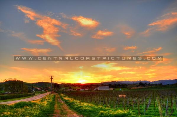 edna-valley-vineyard_8114