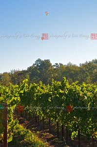 Balloons over the vineyards