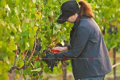 Deb thins grapes