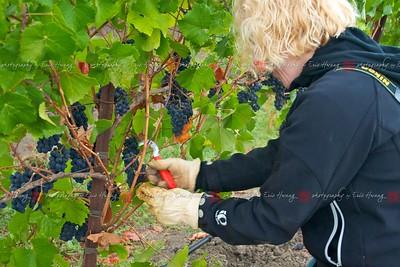 Serena thins grapes