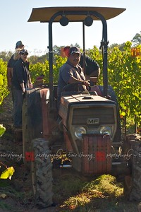 Tractor moving through the vine rows