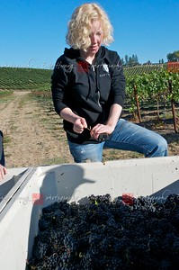 Serena inspects the grapes
