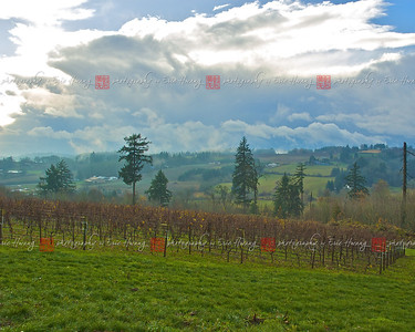 Lachini Vineyards, Willamette Valley, Oregon