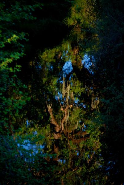 Reflection - Napa River