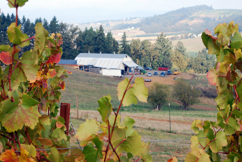 Harvest Willamette Valley 2008