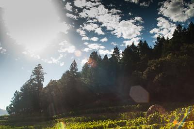 Morning at Pine Ridge, Stags Leap AVA Napa
