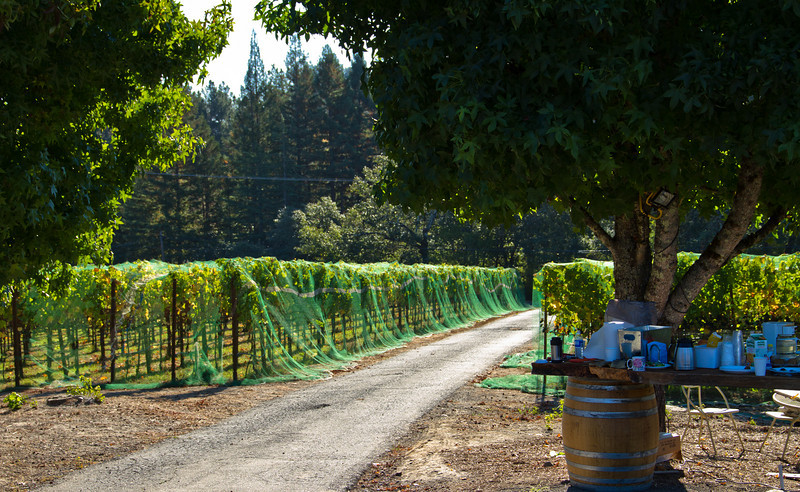 on the right are signs of our early morning harvest (coffee, fruit, etc) at the lovely TnT Vineyard in Sebastopol, CA