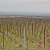 1er Cru Champagne vineyards during my pruning visit, winter 2011