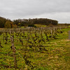 some vineyards in the region of Saumur, taken in the middle of winter (end of February).Bud break for these Cabernet Franc vines is about 6 weeks away. During my 6 days touring this region, I never saw the sun one time. Just grey clouds, and cold, damp, windy weather.