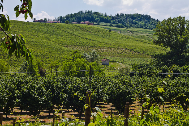 In the direction of Villero vineyards, near Castiglione Falletto (as seen from the east facing side of Cannubi)