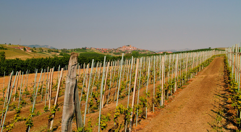 Two weeks post- bud break, with a perfectly sunny, mildly warm springtime in Barolo, 2011