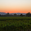 Russian River Valley sunset. I never get tired of it...