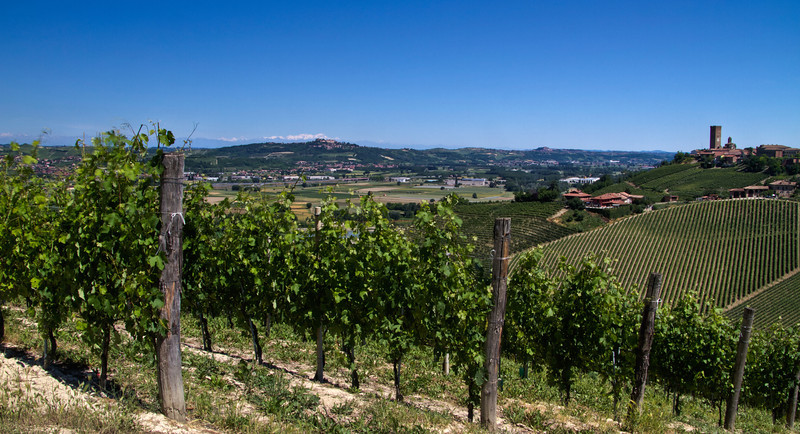 I took this just a few hundred meters from Rabaja, in Barbaresco. Looking north, with the tower of Barbaresco village on the right and Roero in the distance (center-left).One, perhaps two days per month, the skies clear enough to see the Alps. I have yet to visit the equal of this wondrous, historical winegrowing region, and I've visited many