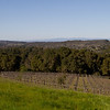The Hidden Block Vineyard for the Varner/Neely label, Santa Cruz AVA. Special place, special people, really special wines.