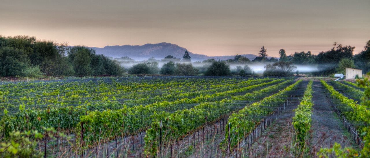 a 2 image HDR taken from the side of the road near Graton, early one morning just prior to the 2010 harvest