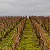 Champagne vineyards, winter 2011. Bud break is about 45 days away at this point