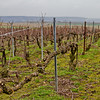Old Vine Pinot Noir in 1er Cru vineyards, winter 2011, visited during pruning.
