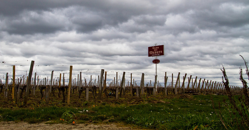 Clos des Menuts vineyard (Saint-Émilion Grand Cru), one of the oldest properties in the town, and one of the highest at 90 meters (295 feet) above sea level. The 30-year old vines are still asleep on this cold, windy winter day in March 2011.