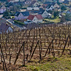 Winegrowing vineyards in Alsace, about 20 minutes west of Colmar.
