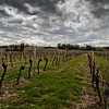 really flat light, typical of Pomerol, Bordeaux during March 2011