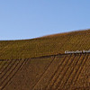 As the Mosel bends back toward the north, the village of Klüsserath, with its steeply sloped Riesling vineyards catches the last rays of the day's sunshine in March, 2011, about one month before bud-break.