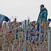 Pruning work in 1er Cru vineyards of Champagne on a cold, wet, very windy day.