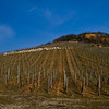 Cru Vineyards in Alsace, winter 2011