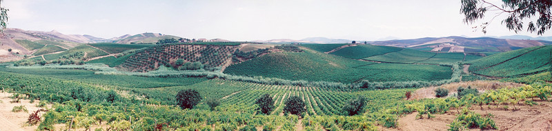 Panorama of Spadafora Vineyard