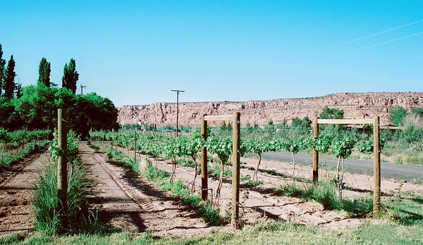 Spanish Valley Vineyard.  Moab, Utah