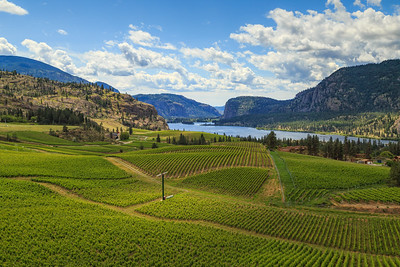 Blue Mountain Vineyards and Cellars- Classic View