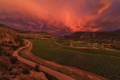 Blue Mountain Vineyards and Cellars- Cotton Candy Skies II