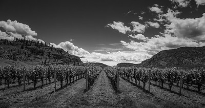 Blue Mountain Vineyards- Monochrome