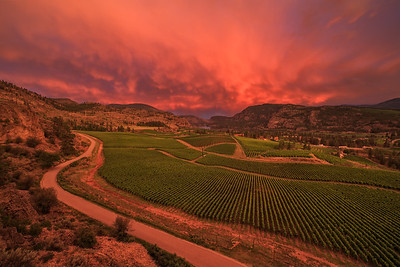 Blue Mountain Vineyards and Cellars- Cotton Candy Skies