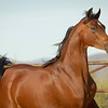 01 Bey Filly-9515