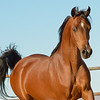 01 Bey Filly-9638