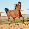 01 Bey Filly-9637