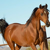 01 Bey Filly-9611