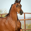 01 Bey Filly-9517