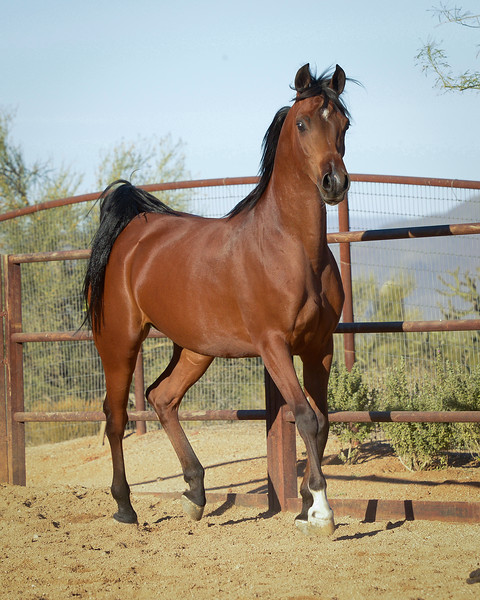 01 Bey Filly-9568