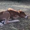 Marti X Surastar at 4 weeks old