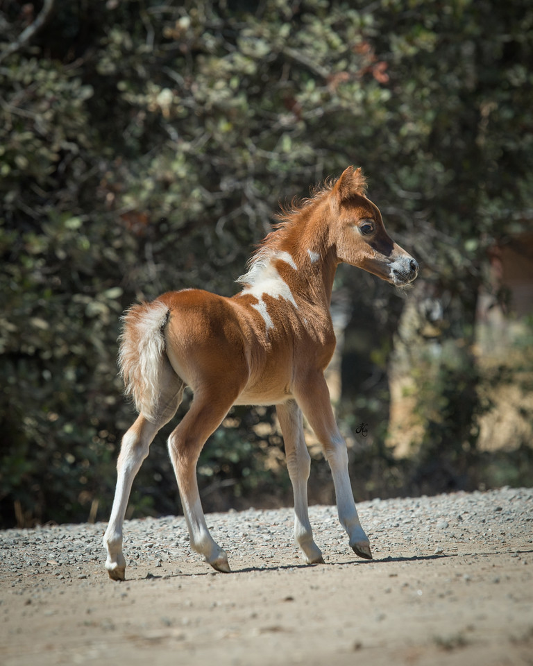 Marilyn's 2016 filly  Wingates Majestic Heiress