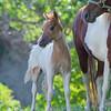 Contessa first foal