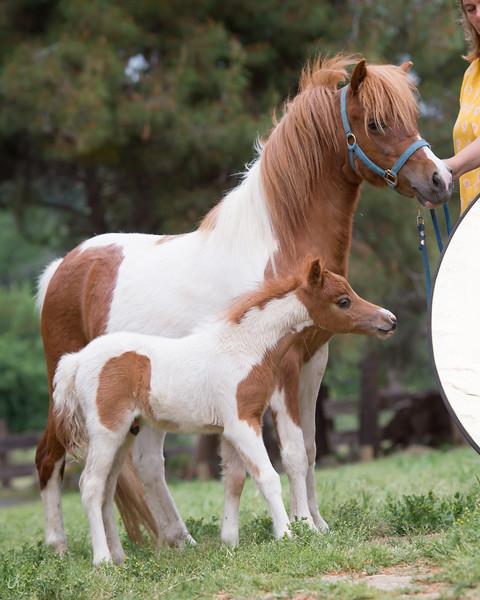 Rivenburghs Jess Fantastic and her 2018 baby, Wingates Rebelton