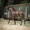 Dam Of 2018 Black filly  Wingates Mimosa