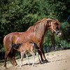 Oak Bay Salsas Bella Luna at age 4 with her first foal