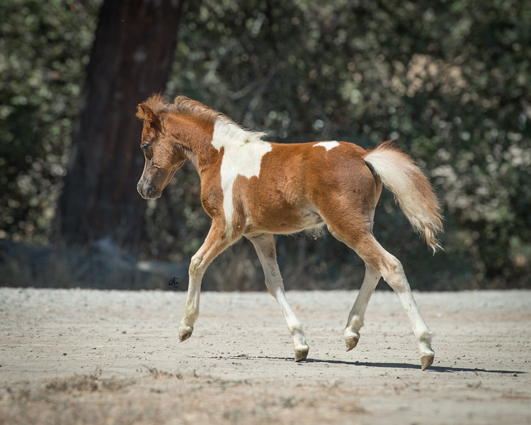 Johnny Walker Red as a weanling