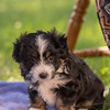Squrril X Rouger 2021 puppies-828