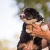 Squrril X Rouger 2021 puppies-818